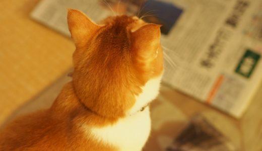 新聞を読むメリットってあるの?高いけど読みつづけてる理由