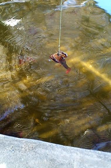 ザリガニ釣りの写真