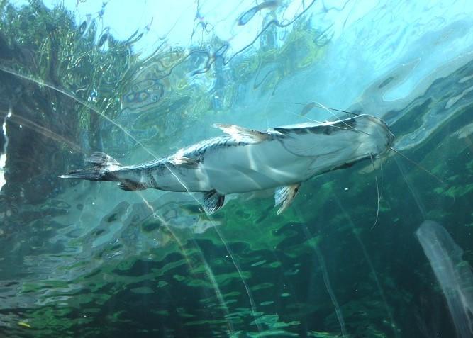 下から見た魚の写真